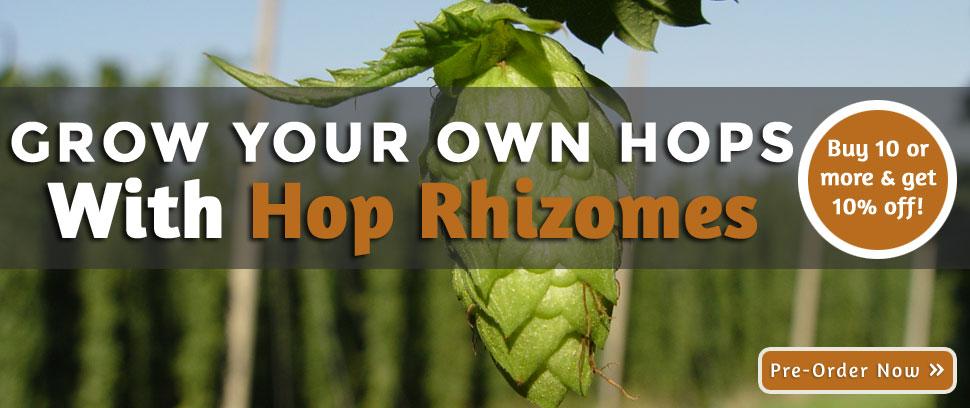 Hop Rhizomes Home Brew