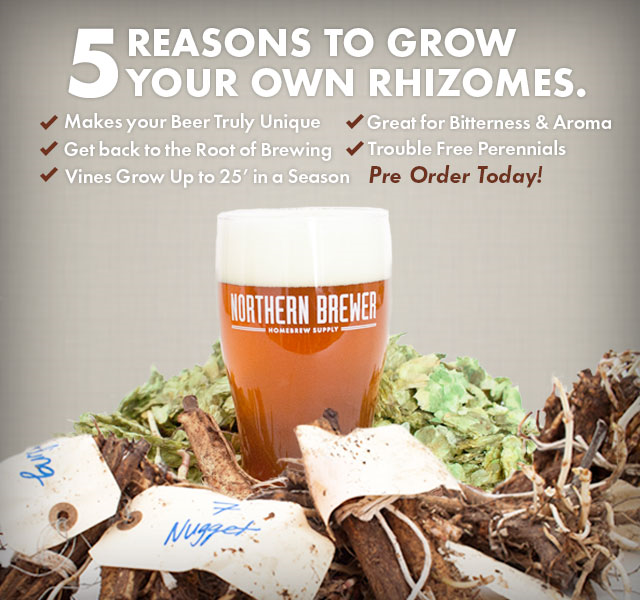 Northern Brewer Rhizomes