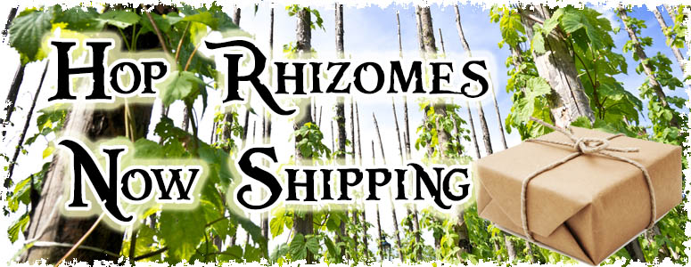 how to grow hop rhizomes
