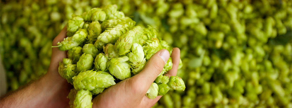 30% off hops at Label Peelers!