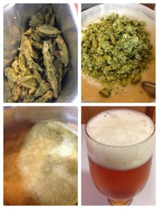 Brewing More Beer's Pliny the Elder Kit!